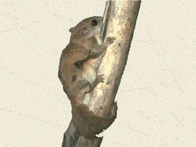 Eichhörnchen kot aussehen
